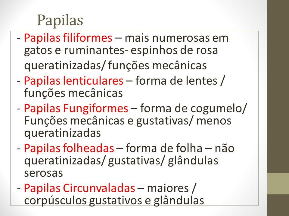 Papilas - Papilas filiformes – mais numerosas em gatos e ruminantes- espinhos de rosa queratinizadas/ funções mecânicas - Papilas lenticulares – forma de lentes / funções mecânicas - Papilas Fungiformes – forma de cogumelo/ Funções mecânicas e gustativas/ menos queratinizadas - Papilas folheadas – forma de folha – não queratinizadas/ gustativas/ glândulas serosas - Papilas Circunvaladas – maiores / corpúsculos gustativos e glândulas
