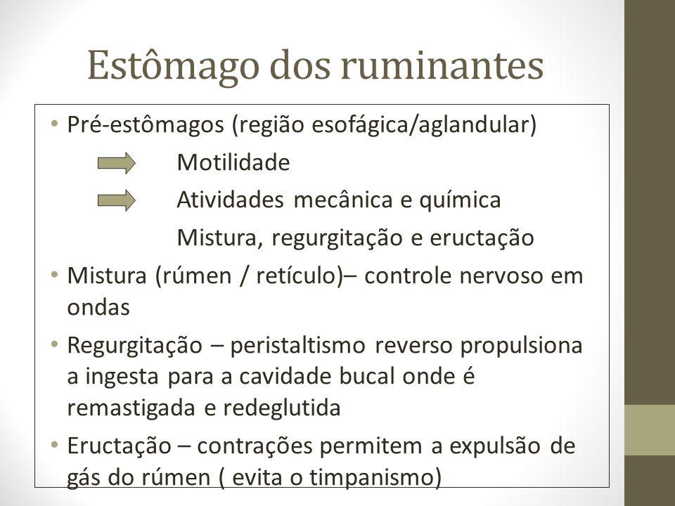 Estômago dos ruminantes Pré-estômagos (região esofágica/aglandular) Motilidade Atividades mecânica e química Mistura, regurgitação e eructação Mistura
