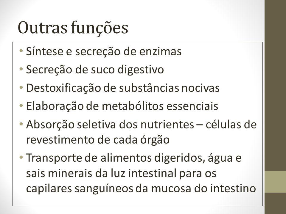 Outras funções Síntese e secreção de enzimas Secreção de suco digestivo Destoxificação de substâncias nocivas Elaboração de metabólitos essenciais Abs