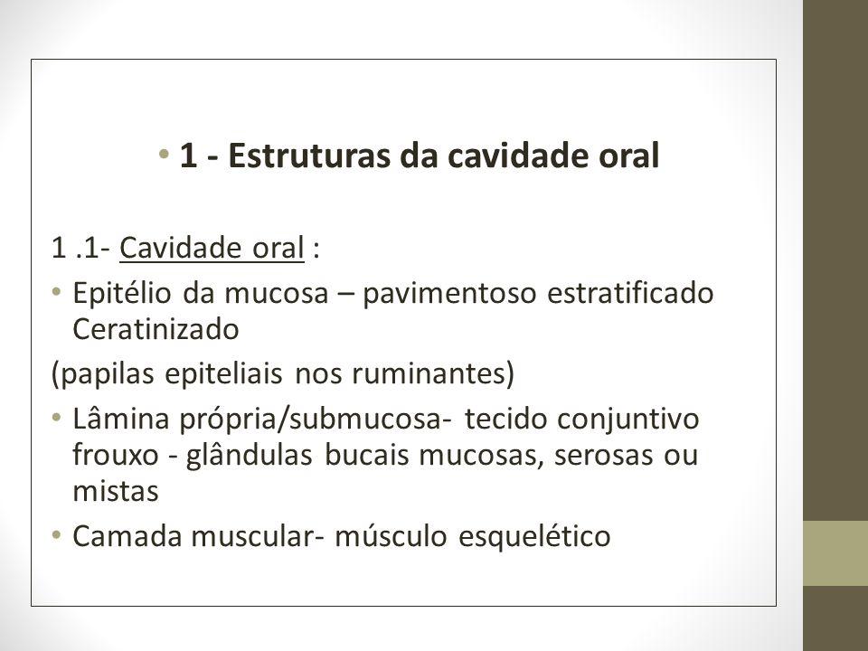 1 - Estruturas da cavidade oral 1.1- Cavidade oral : Epitélio da mucosa – pavimentoso estratificado Ceratinizado (papilas epiteliais nos ruminantes) L