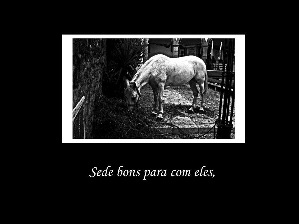 tende compaixão dos pobres animais!
