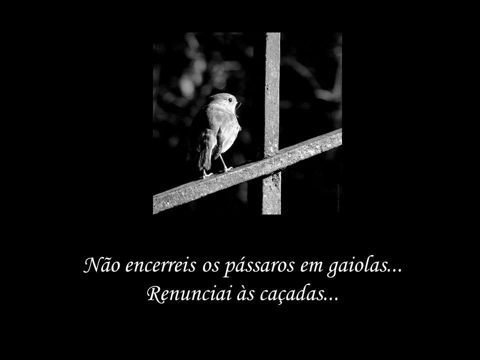 Não encerreis os pássaros em gaiolas... Renunciai às caçadas...