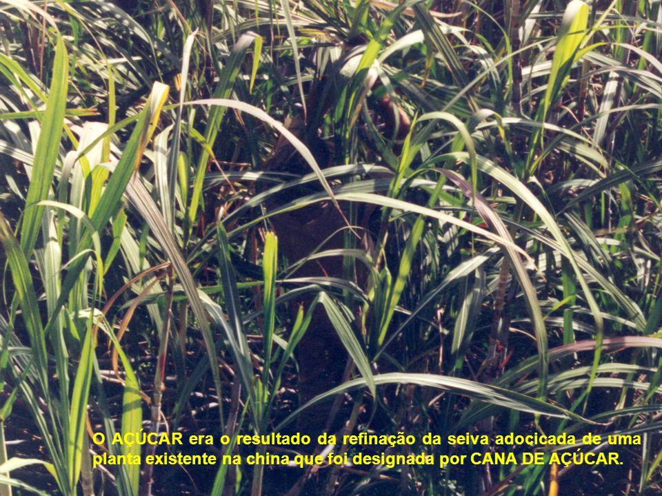 O AÇÚCAR era o resultado da refinação da seiva adocicada de uma planta existente na china que foi designada por CANA DE AÇÚCAR.