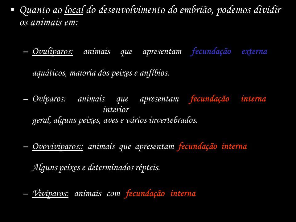 Quanto ao local do desenvolvimento do embrião, podemos dividir os animais em: –Ovulíparos: animais que apresentam fecundação externa e desenvolvimento