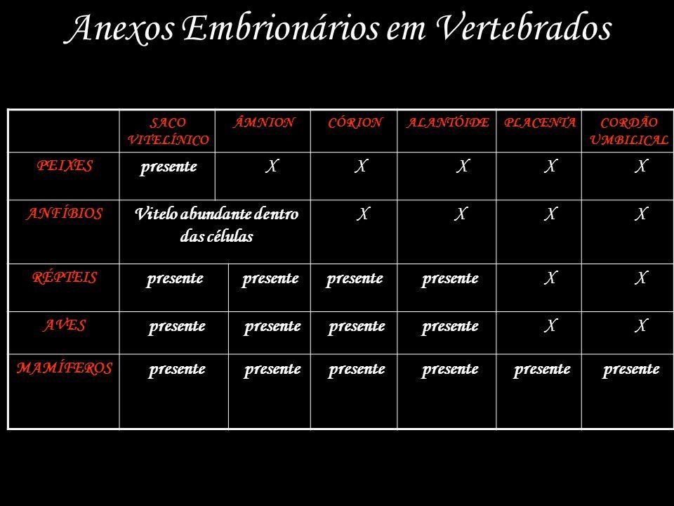Anexos Embrionários em Vertebrados SACO VITELÍNICO ÂMNIONCÓRIONALANTÓIDEPLACENTACORDÃO UMBILICAL PEIXES presente X X X X X ANFÍBIOS Vitelo abundante dentro das células X X X X RÉPTEIS presente X X AVES presente X X MAMÍFEROS presente