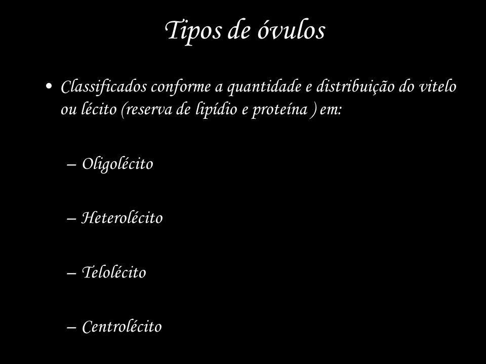 Tipos de óvulos Classificados conforme a quantidade e distribuição do vitelo ou lécito (reserva de lipídio e proteína ) em: –Oligolécito –Heterolécito –Telolécito –Centrolécito