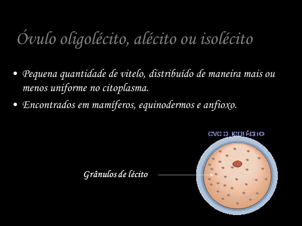 Óvulo oligolécito, alécito ou isolécito Pequena quantidade de vitelo, distribuído de maneira mais ou menos uniforme no citoplasma. Encontrados em mamí