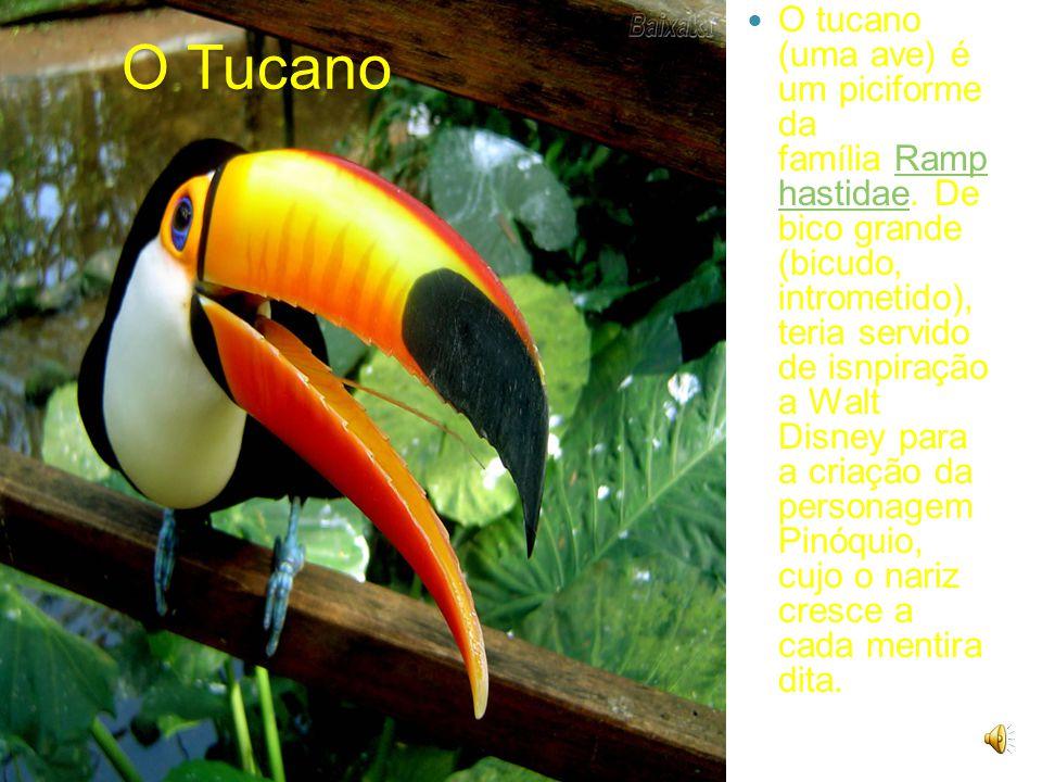 O Tucano O tucano (uma ave) é um piciforme da família Ramp hastidae.