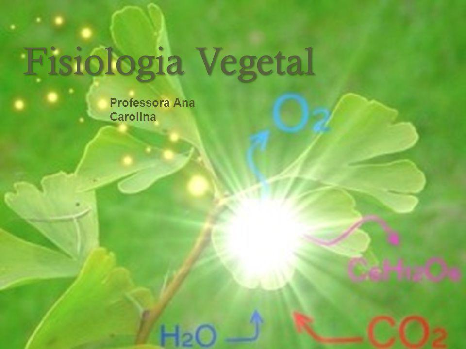 Fisiologia Vegetal Professora Ana Carolina