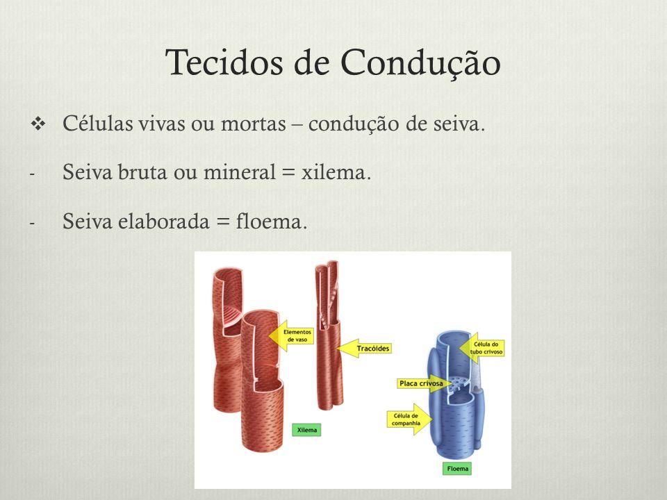 Tecidos de Condução Células vivas ou mortas – condução de seiva. - Seiva bruta ou mineral = xilema. - Seiva elaborada = floema.
