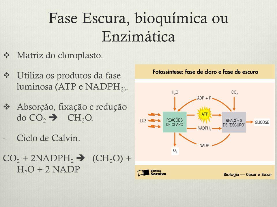 Fase Escura, bioquímica ou Enzimática Matriz do cloroplasto. Utiliza os produtos da fase luminosa (ATP e NADPH 2). Absorção, fixação e redução do CO 2