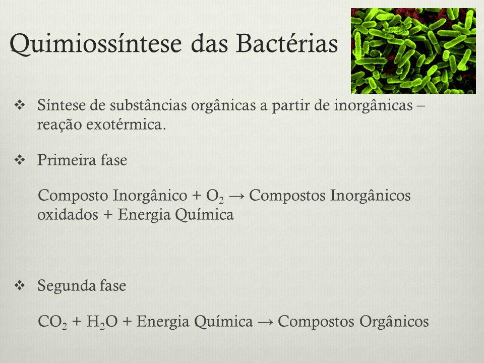 Quimiossíntese das Bactérias Síntese de substâncias orgânicas a partir de inorgânicas – reação exotérmica. Primeira fase Composto Inorgânico + O 2 Com