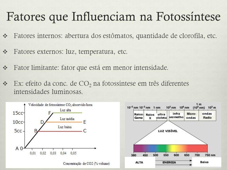 Fatores que Influenciam na Fotossíntese Fatores internos: abertura dos estômatos, quantidade de clorofila, etc. Fatores externos: luz, temperatura, et