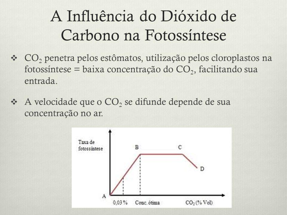 A Influência do Dióxido de Carbono na Fotossíntese CO 2 penetra pelos estômatos, utilização pelos cloroplastos na fotossíntese = baixa concentração do