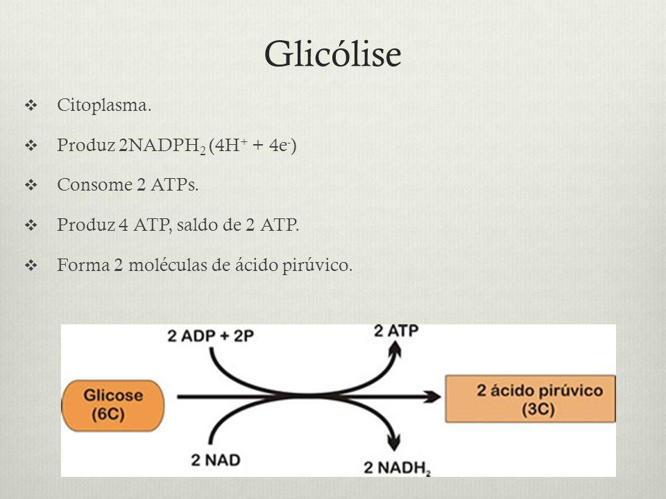 Glicólise Citoplasma. Produz 2NADPH 2 (4H + + 4e - ) Consome 2 ATPs. Produz 4 ATP, saldo de 2 ATP. Forma 2 moléculas de ácido pirúvico.