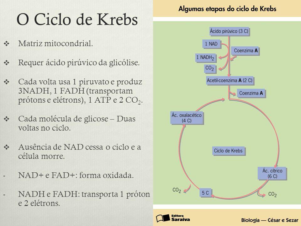 O Ciclo de Krebs Matriz mitocondrial. Requer ácido pirúvico da glicólise. Cada volta usa 1 piruvato e produz 3NADH, 1 FADH (transportam prótons e elét