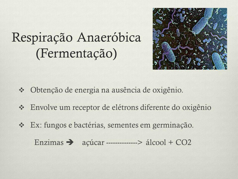 Respiração Anaeróbica (Fermentação) Obtenção de energia na ausência de oxigênio. Envolve um receptor de elétrons diferente do oxigênio Ex: fungos e ba