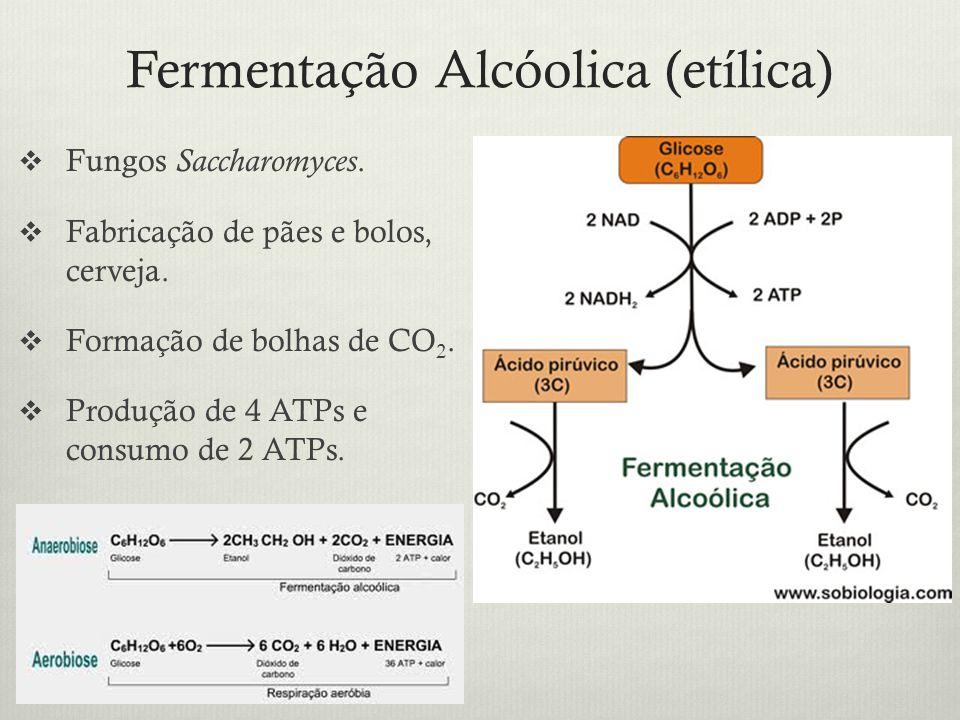 Fermentação Alcóolica (etílica) Fungos Saccharomyces. Fabricação de pães e bolos, cerveja. Formação de bolhas de CO 2. Produção de 4 ATPs e consumo de