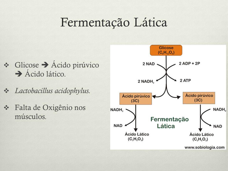 Fermentação Lática Glicose Ácido pirúvico Ácido lático. Lactobacillus acidophylus. Falta de Oxigênio nos músculos.