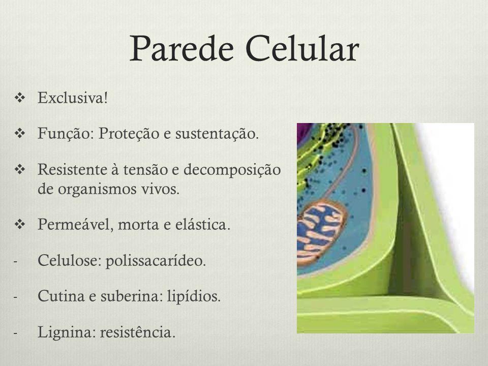 Parede Celular Exclusiva! Função: Proteção e sustentação. Resistente à tensão e decomposição de organismos vivos. Permeável, morta e elástica. - Celul