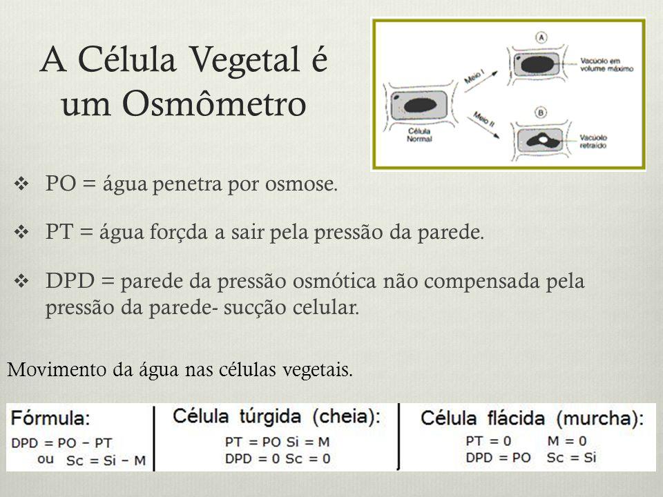 A Célula Vegetal é um Osmômetro PO = água penetra por osmose. PT = água forçda a sair pela pressão da parede. DPD = parede da pressão osmótica não com