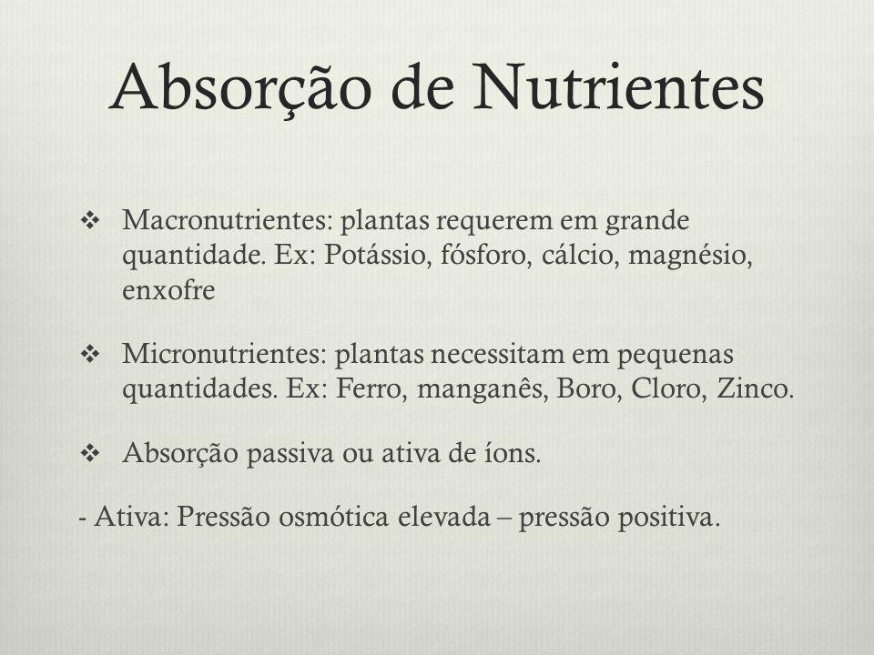 Absorção de Nutrientes Macronutrientes: plantas requerem em grande quantidade. Ex: Potássio, fósforo, cálcio, magnésio, enxofre Micronutrientes: plant