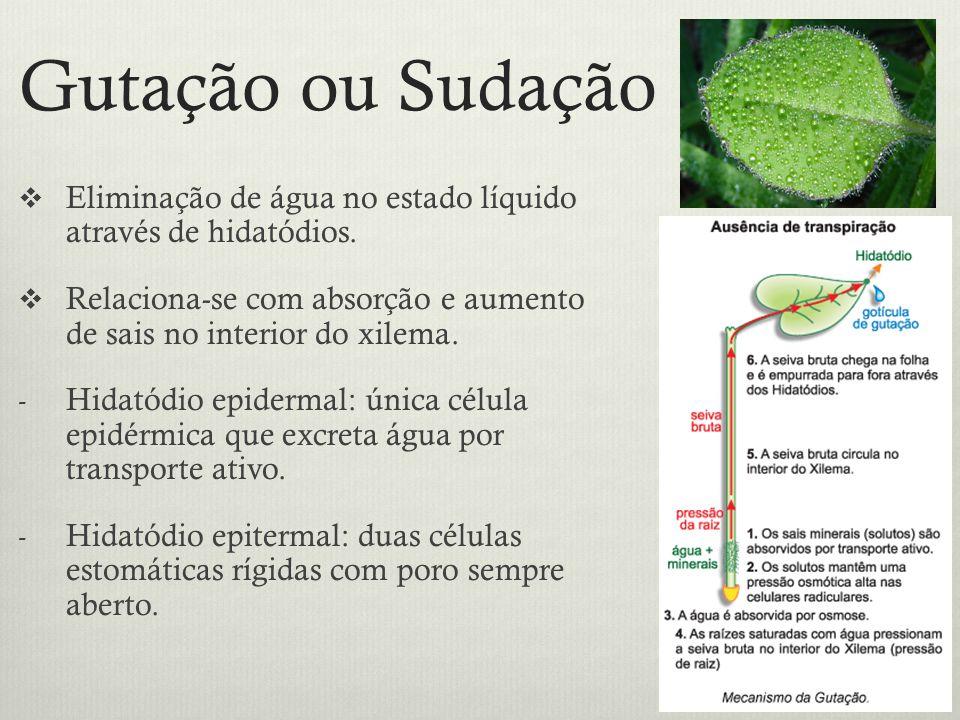 Gutação ou Sudação Eliminação de água no estado líquido através de hidatódios. Relaciona-se com absorção e aumento de sais no interior do xilema. - Hi