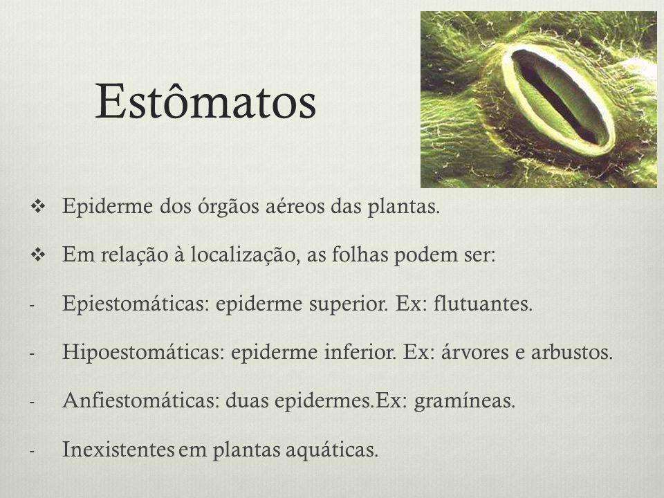 Estômatos Epiderme dos órgãos aéreos das plantas. Em relação à localização, as folhas podem ser: - Epiestomáticas: epiderme superior. Ex: flutuantes.
