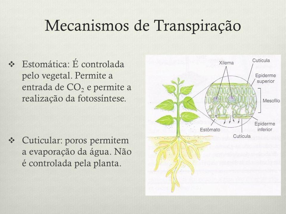 Mecanismos de Transpiração Estomática: É controlada pelo vegetal. Permite a entrada de CO 2 e permite a realização da fotossíntese. Cuticular: poros p