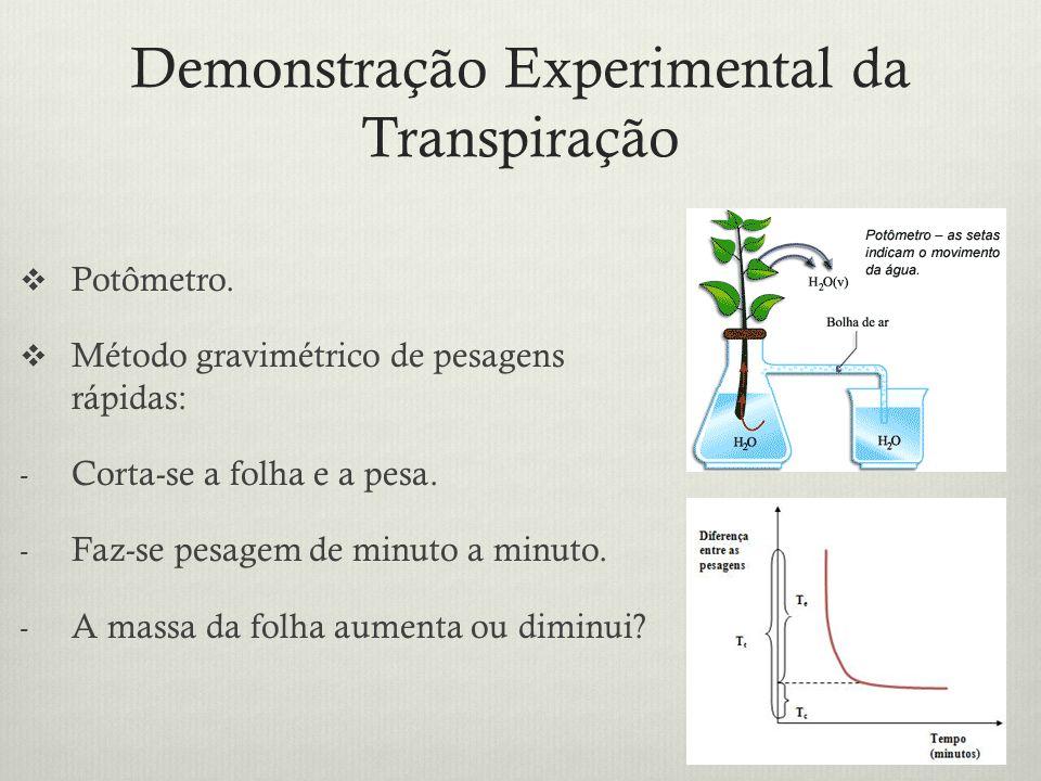 Demonstração Experimental da Transpiração Potômetro. Método gravimétrico de pesagens rápidas: - Corta-se a folha e a pesa. - Faz-se pesagem de minuto