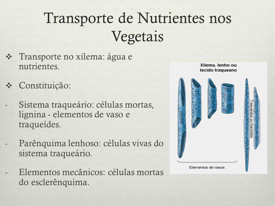 Transporte de Nutrientes nos Vegetais Transporte no xilema: água e nutrientes. Constituição: - Sistema traqueário: células mortas, lignina - elementos