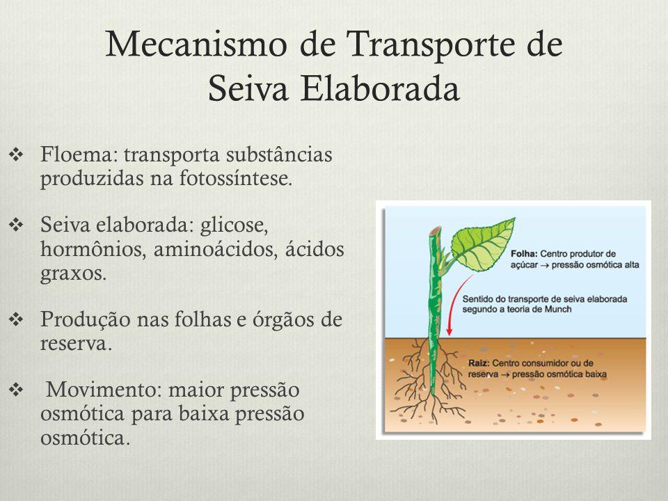 Mecanismo de Transporte de Seiva Elaborada Floema: transporta substâncias produzidas na fotossíntese. Seiva elaborada: glicose, hormônios, aminoácidos