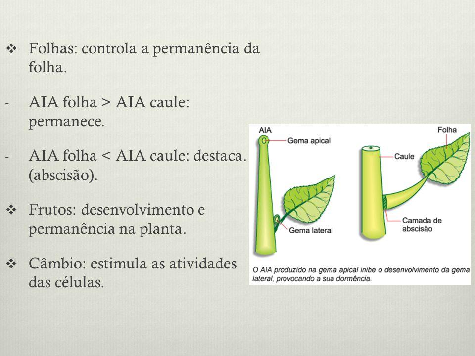 Folhas: controla a permanência da folha. - AIA folha > AIA caule: permanece. - AIA folha < AIA caule: destaca. (abscisão). Frutos: desenvolvimento e p