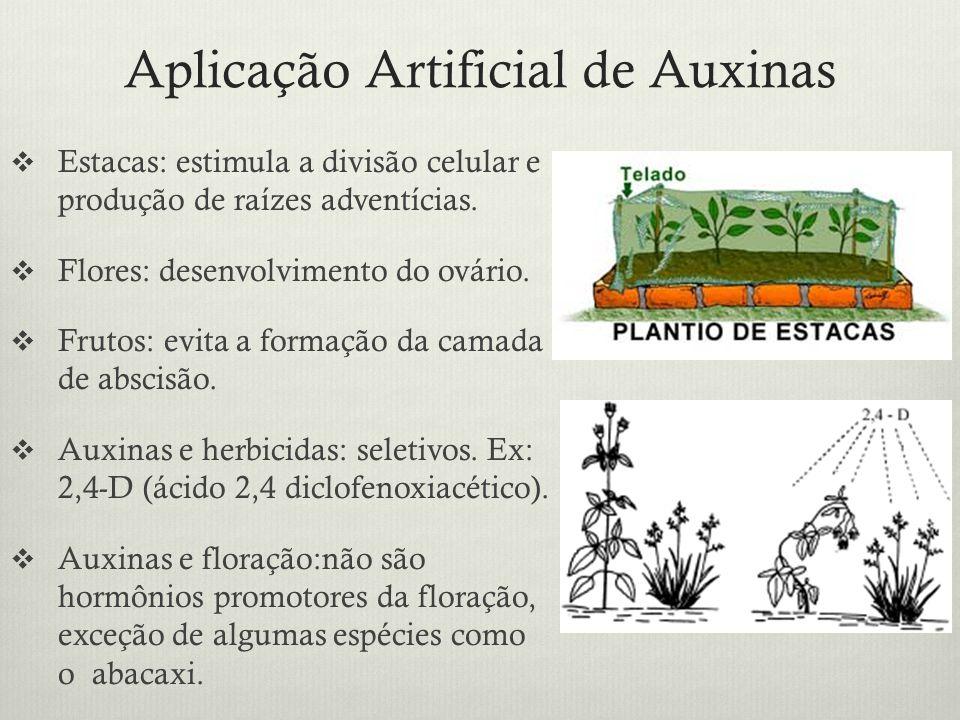 Aplicação Artificial de Auxinas Estacas: estimula a divisão celular e produção de raízes adventícias. Flores: desenvolvimento do ovário. Frutos: evita