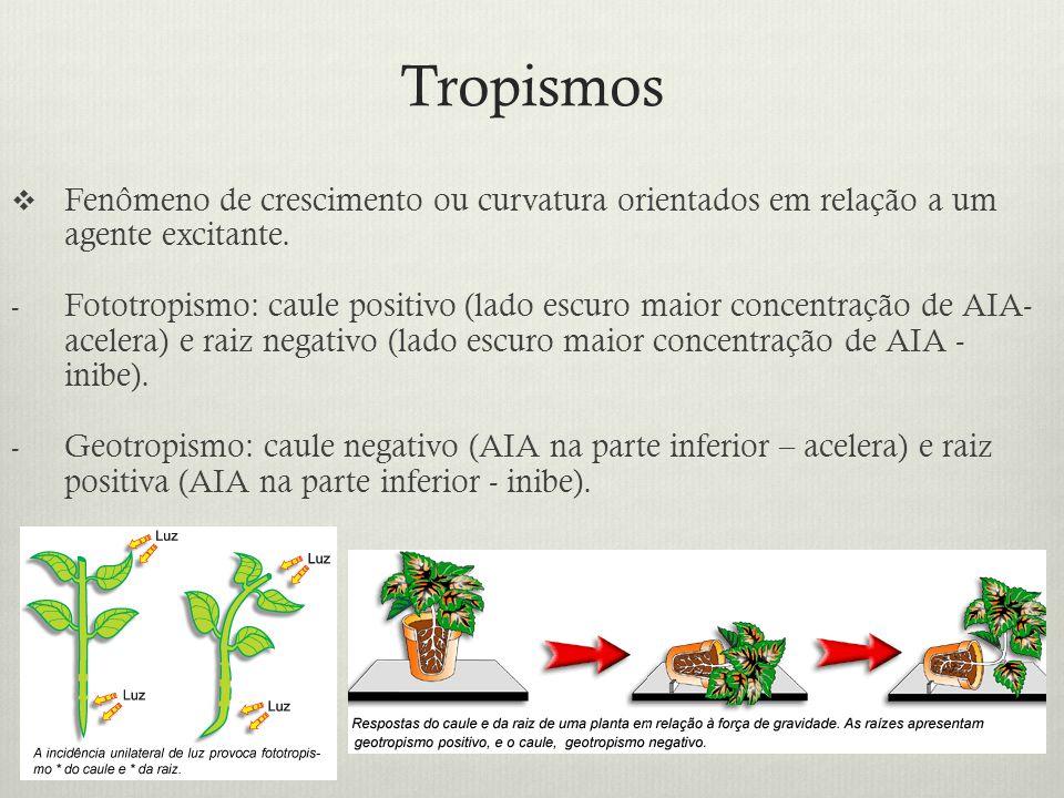 Tropismos Fenômeno de crescimento ou curvatura orientados em relação a um agente excitante. - Fototropismo: caule positivo (lado escuro maior concentr