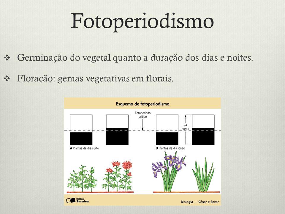 Fotoperiodismo Germinação do vegetal quanto a duração dos dias e noites. Floração: gemas vegetativas em florais.