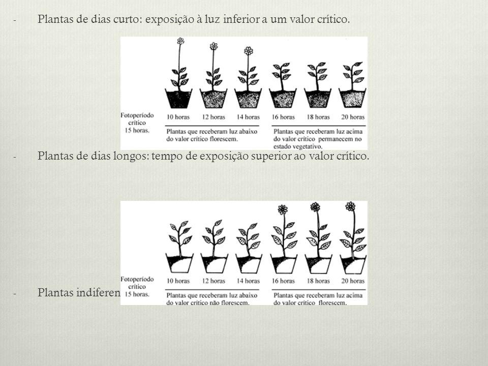 - Plantas de dias curto: exposição à luz inferior a um valor crítico. - Plantas de dias longos: tempo de exposição superior ao valor crítico. - Planta
