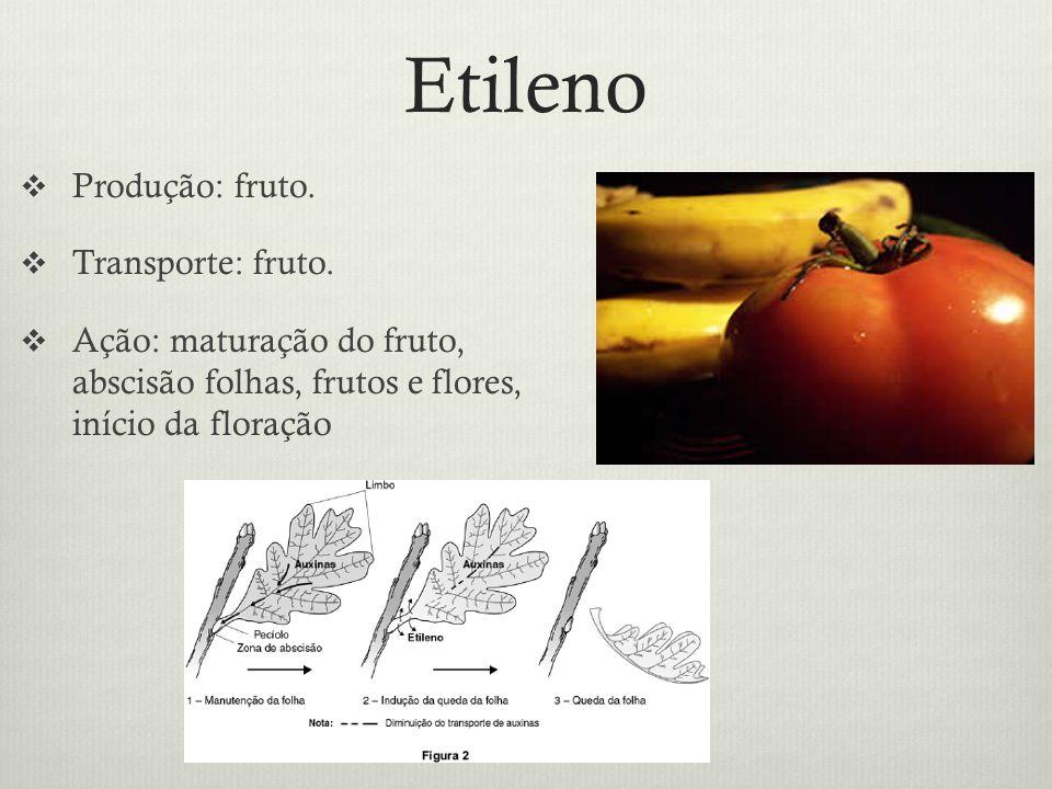 Etileno Produção: fruto. Transporte: fruto. Ação: maturação do fruto, abscisão folhas, frutos e flores, início da floração