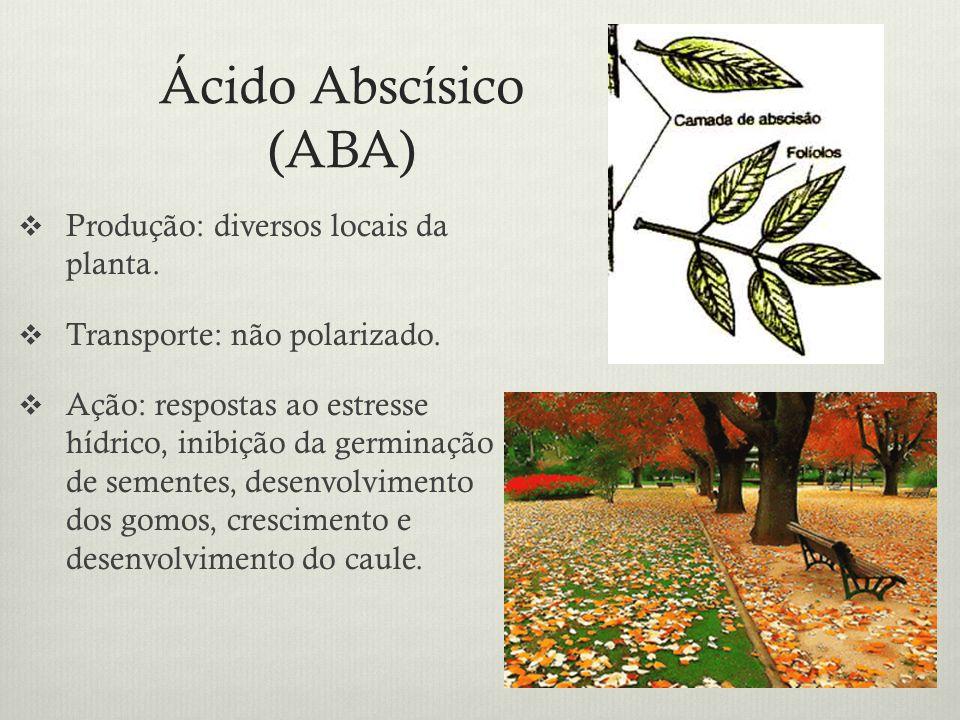 Ácido Abscísico (ABA) Produção: diversos locais da planta. Transporte: não polarizado. Ação: respostas ao estresse hídrico, inibição da germinação de