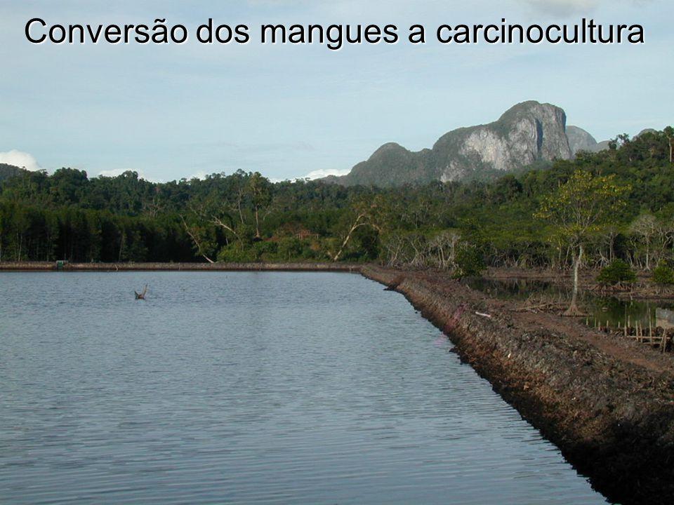 Conversão dos mangues a carcinocultura