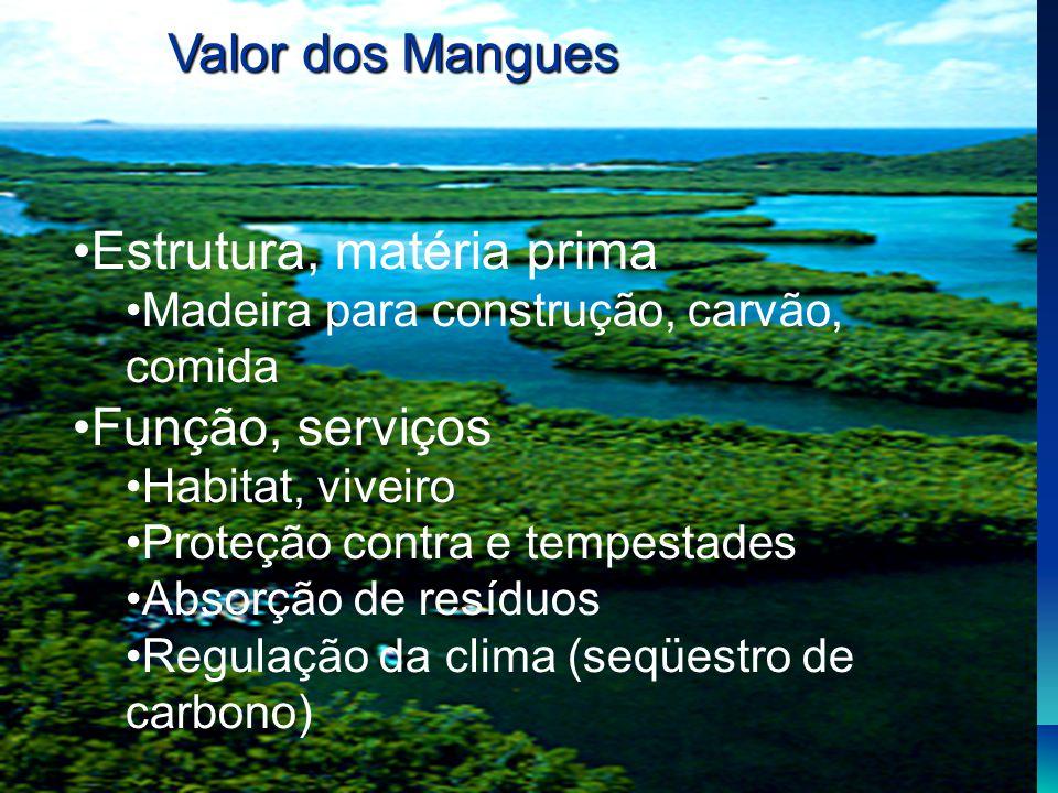 Estrutura, matéria prima Madeira para construção, carvão, comida Função, serviços Habitat, viveiro Proteção contra e tempestades Absorção de resíduos