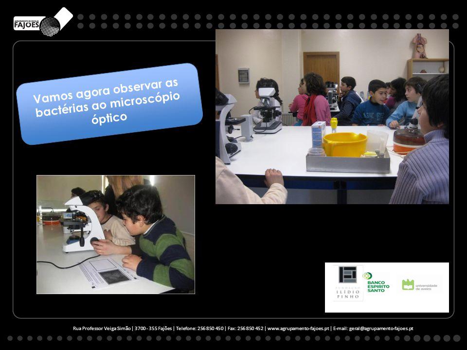 Rua Professor Veiga Simão | 3700 - 355 Fajões | Telefone: 256 850 450 | Fax: 256 850 452 | www.agrupamento-fajoes.pt | E-mail: geral@agrupamento-fajoes.pt Vamos agora observar as bactérias ao microscópio óptico