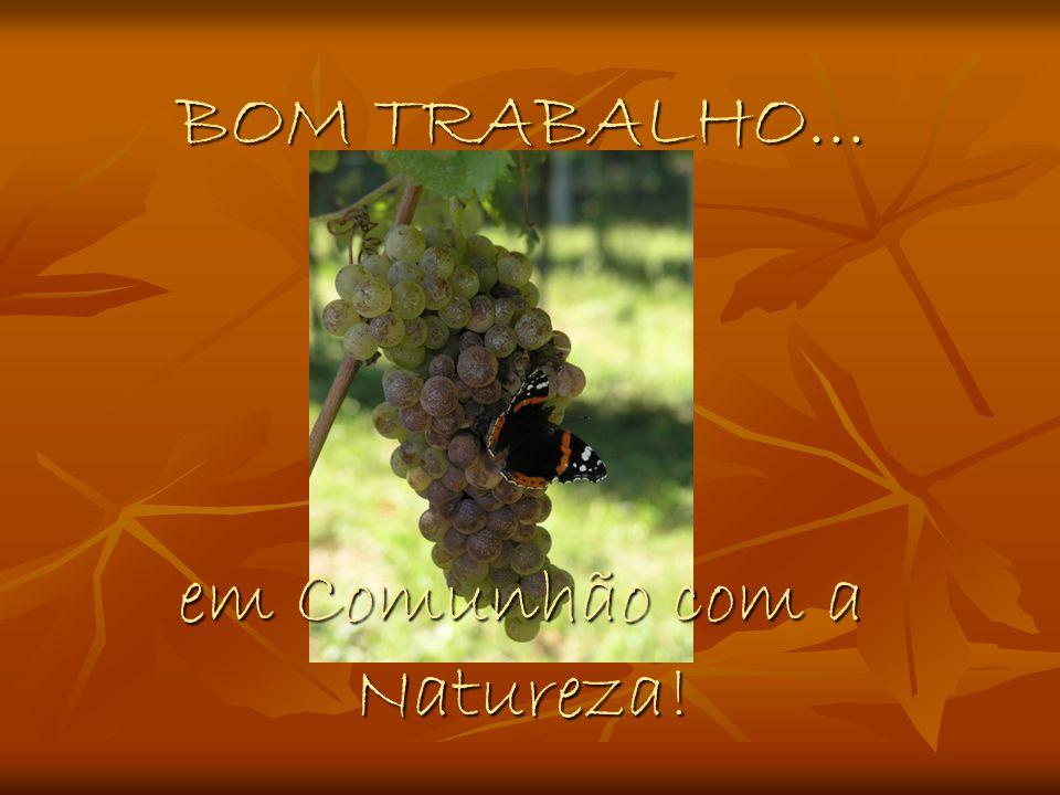 BOM TRABALHO... em Comunhão com a Natureza!