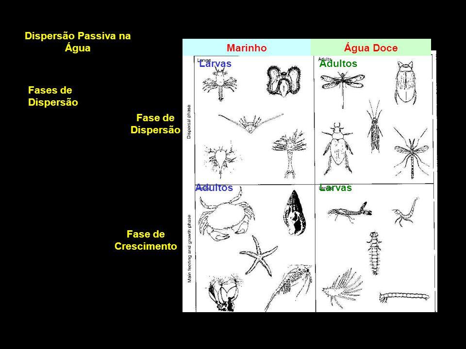 Marinho Larvas Fase de Dispersão Adultos Fase de Crescimento Água Doce Adultos Larvas Dispersão Passiva na Água Fases de Dispersão
