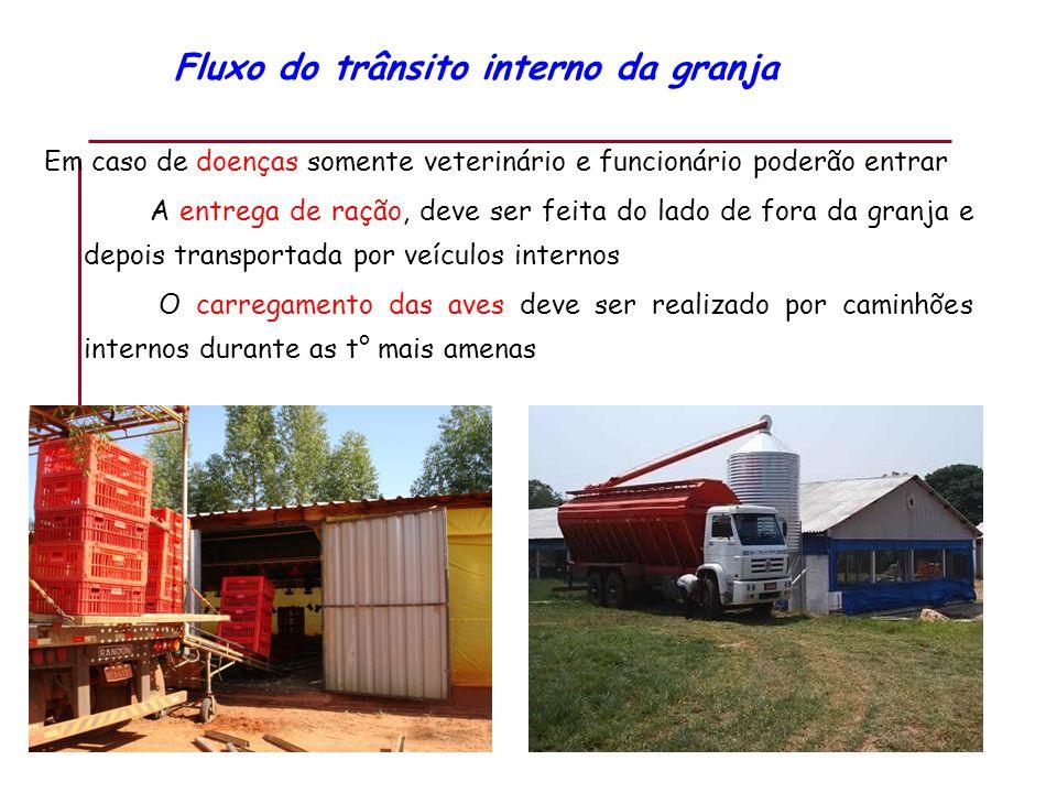Fluxo do trânsito interno da granja Em caso de doenças somente veterinário e funcionário poderão entrar A entrega de ração, deve ser feita do lado de