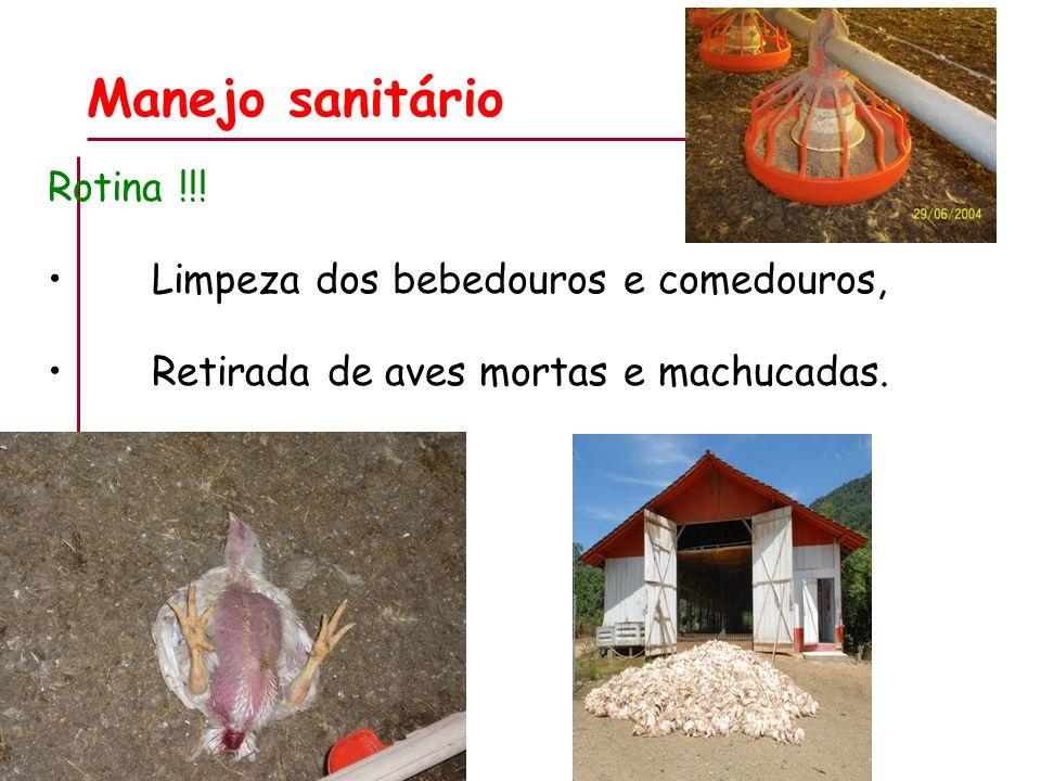 Manejo sanitário Rotina !!! Limpeza dos bebedouros e comedouros, Retirada de aves mortas e machucadas.