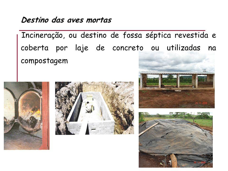 Destino das aves mortas Incineração, ou destino de fossa séptica revestida e coberta por laje de concreto ou utilizadas na compostagem