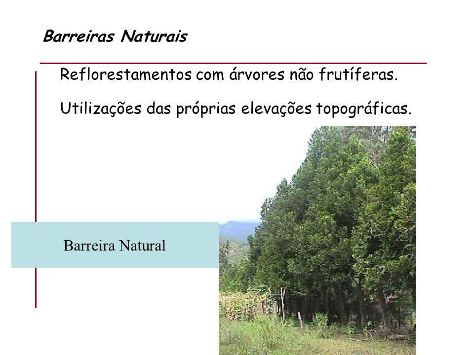 Barreiras Naturais Reflorestamentos com árvores não frutíferas. Utilizações das próprias elevações topográficas. Barreira Natural