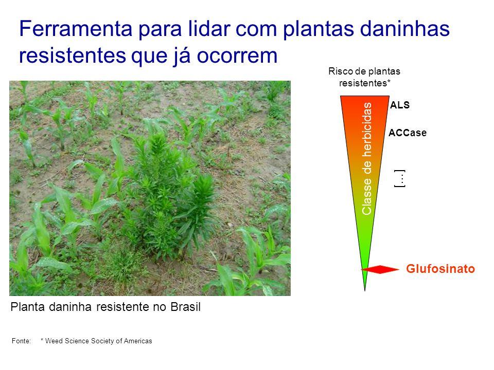 Ferramenta para lidar com plantas daninhas resistentes que já ocorrem Glufosinato Risco de plantas resistentes* ALS ACCase Classe de herbicidas Fonte: