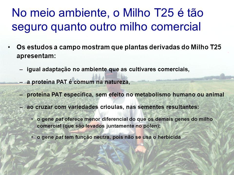 No meio ambiente, o Milho T25 é tão seguro quanto outro milho comercial Os estudos a campo mostram que plantas derivadas do Milho T25 apresentam: –igu